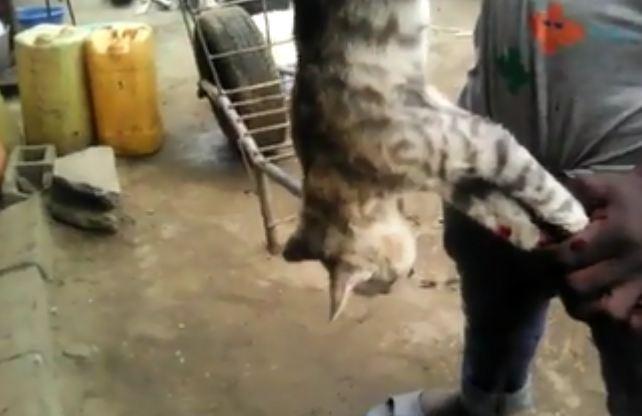 Pointe-noire : Nganda Niaou, restaurant où manger du chat !