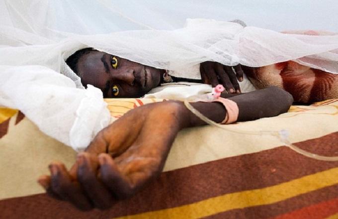 Une épidémie de fièvre jaune déclarée à Pointe-Noire et dans le Kouilou