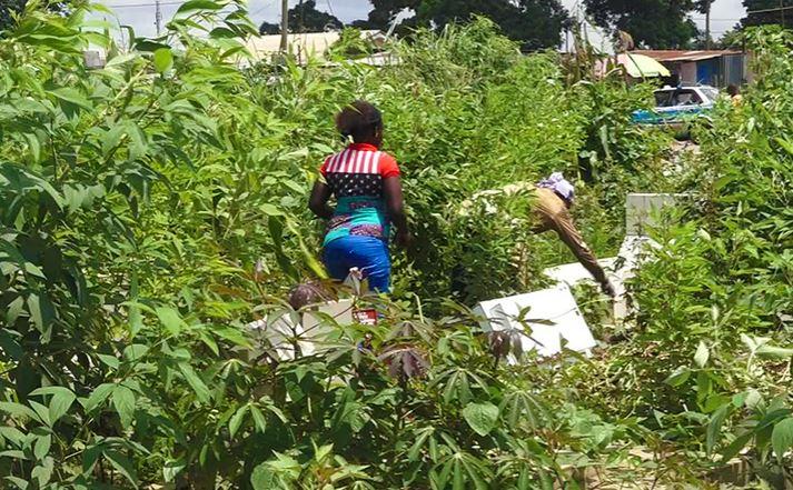 L'ancien cimetière Mont Kamba est transformé en plantations