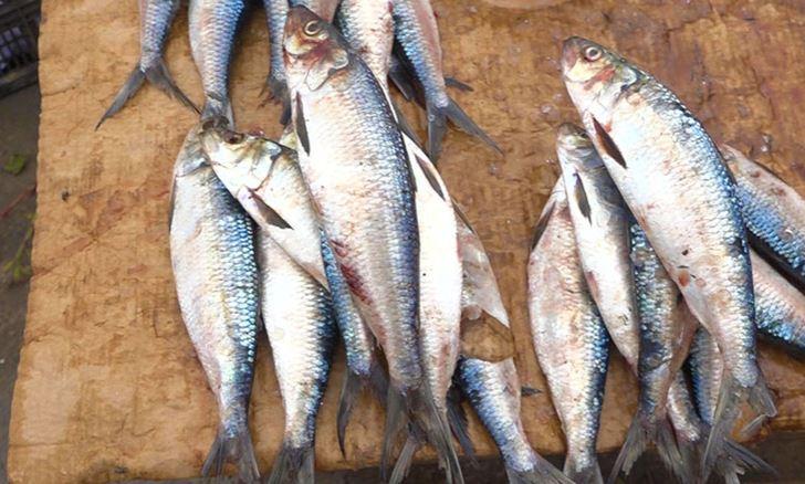 Les consommateurs dénoncent l'augmentation du prix du poisson à Pointe-Noire