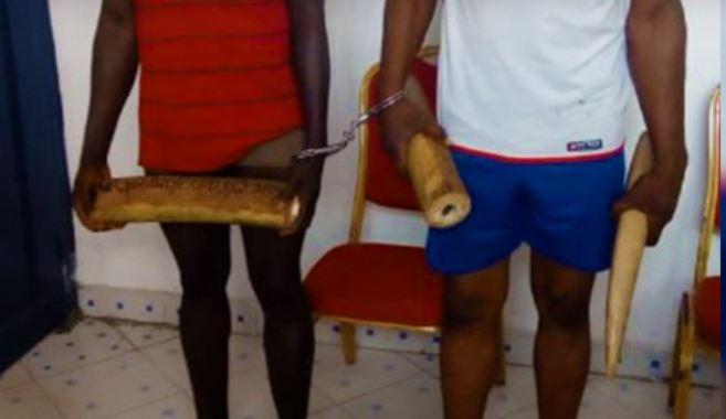 Un militaire et son complice arrêtés avec 20 kg d'ivoire à Oyo