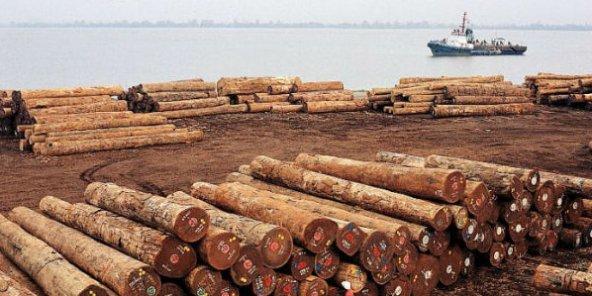 L'interdiction d'exporter le bois sous forme de grumes par tous les pays du Bassin du Congo va entrer en vigueur dès janvier 2022